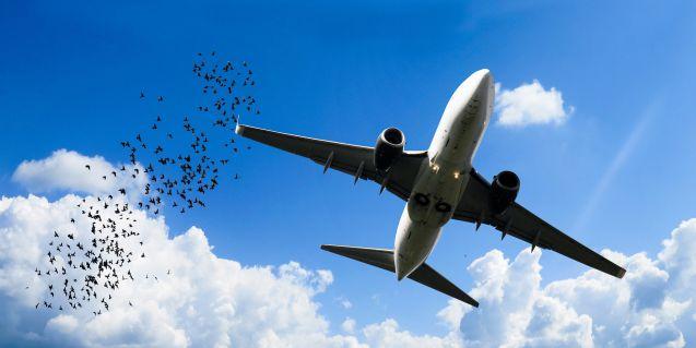 Verträgt sich nicht unbedingt: Vogel und Flugzeug. Foto: Gerhard Gellinger
